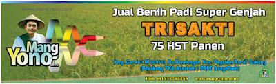 MANGYONO.com Jual Benih Padi Trisakti