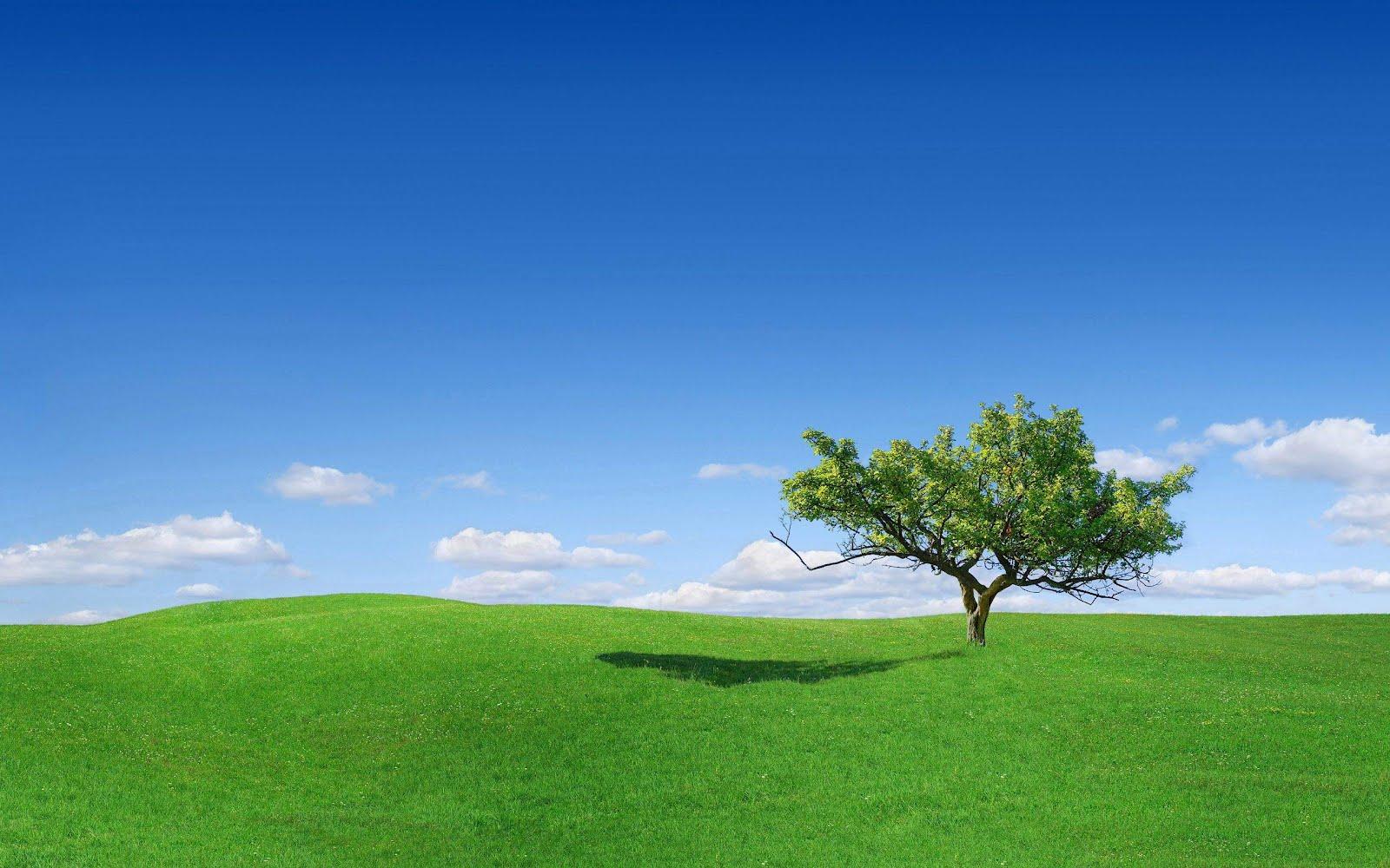 Wallpaper for desktop background grass background - Background pictures of nature for desktop ...