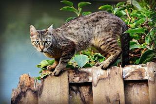 kucing nurut