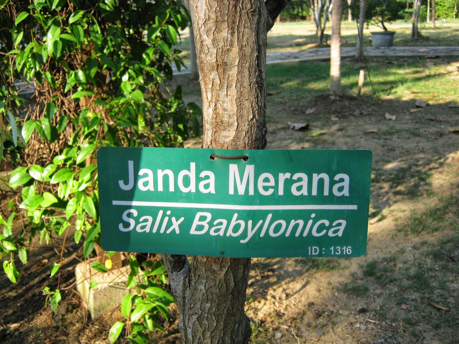Terpesona Hutan Kota Bni Banda Aceh Liza Fathia Com