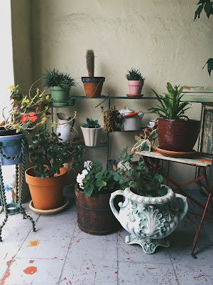 A picture of plants, succulents and cactuses / cacti in the entrance to a house in Bernal Heights, San Francisco