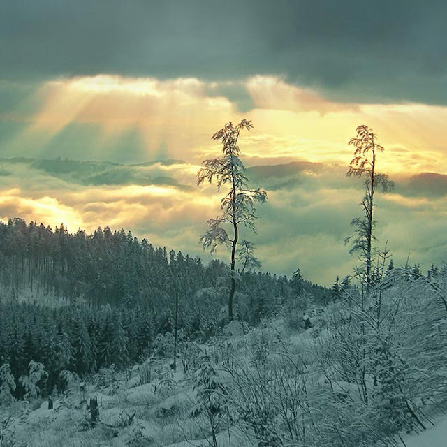 Snow Forest Wallpaper Engine
