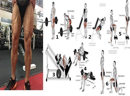 The 6 Effective Leg Building Exercises Which No One Does
