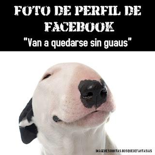 humor para facebook una foto de perro para tu perfil