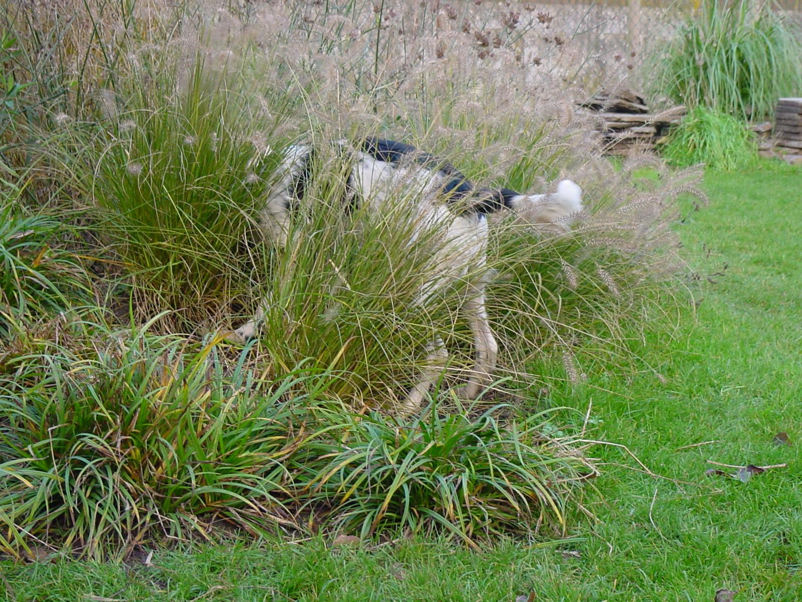 Hond Vriendelijke Tuin : Kluifjes: hondvriendelijke tuin