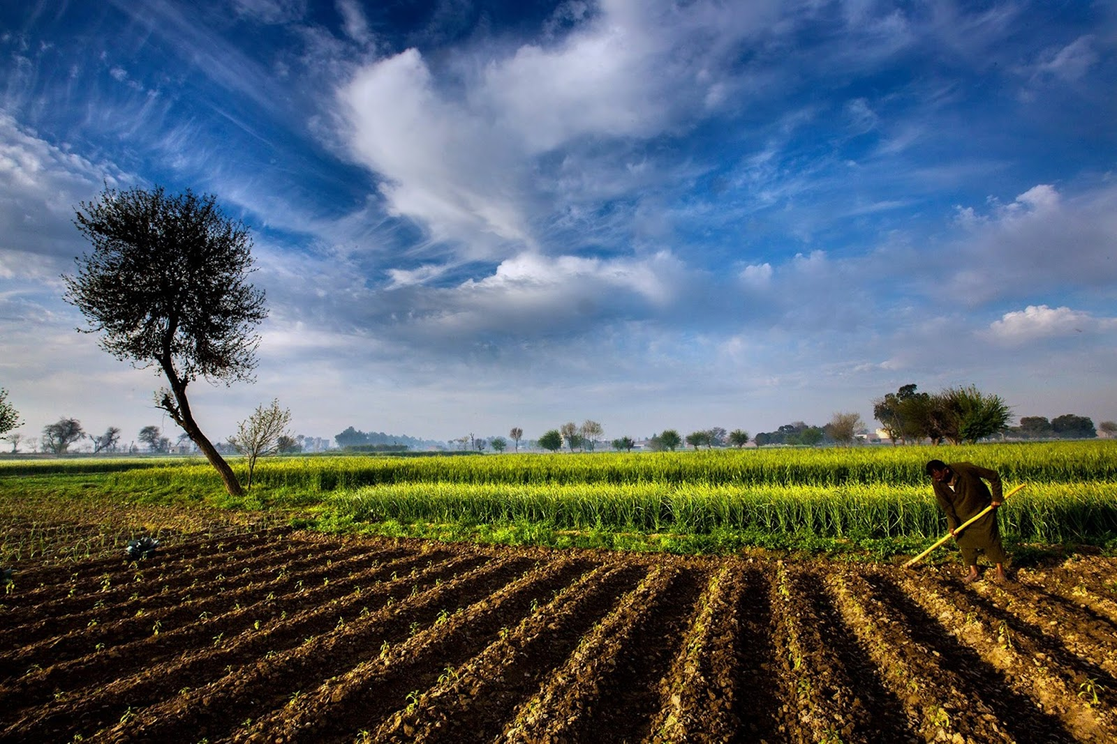 the future of the american agricultural The future of the us-china trade  the job churning is also disruptive — the lost jobs are likely to be in agricultural states and  then american.