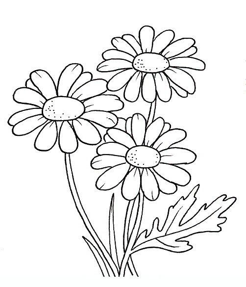 Tranh tô màu bông hoa 0