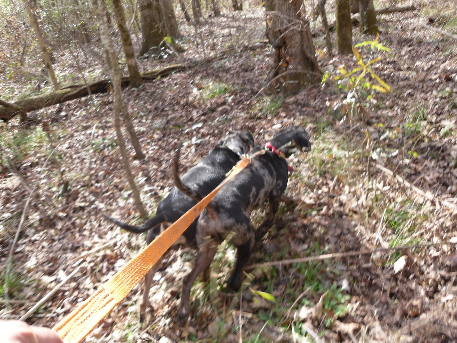best blood trailing dogs