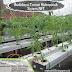 Manfaat Plastik Uv - Budidaya Tomat Hidroponik Sistem Nft