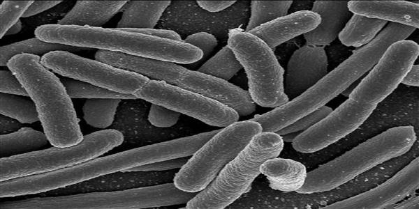 «Επειγόντως νέα αντιβιοτικά» - Καμπανάκι από τον ΠΟΥ για 12 οικογένειες πολυανθεκτικών βακτηρίων