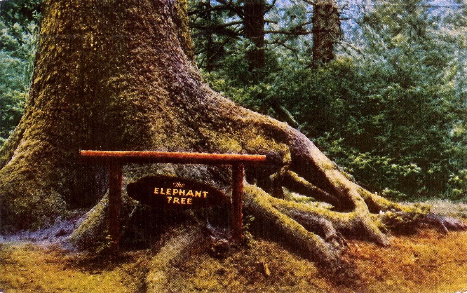 Writerquake: Old Postcard Wednesday--California Redwoods