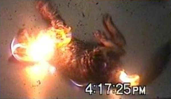 Cat burned to death video