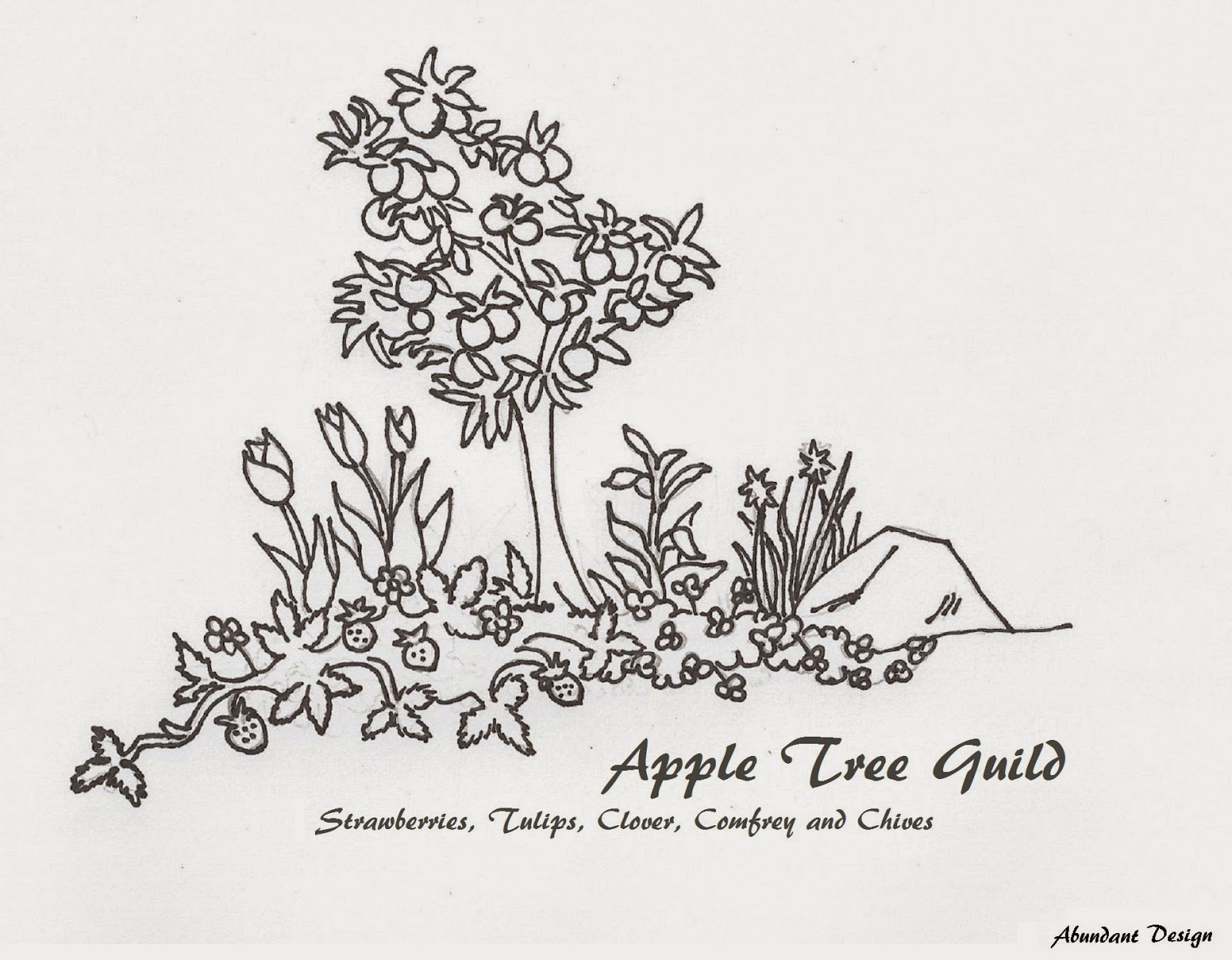coloring page for kids apple tree guild education forum at permies
