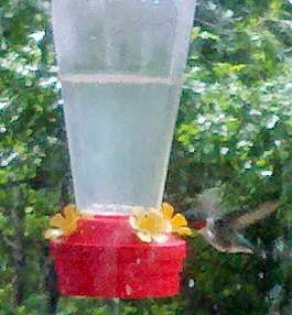 how to make your own hummingbird food, how to make humming bird nectar, attracting hummingbirds