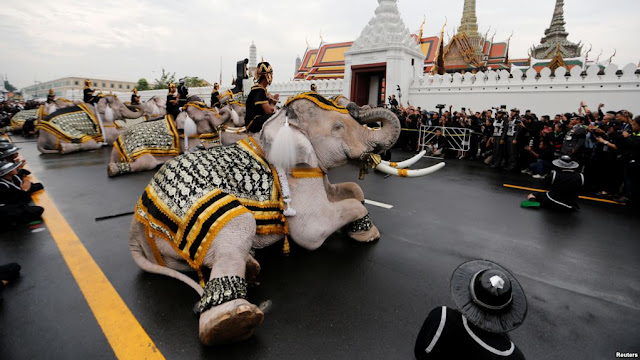 Gajah Putih Berlutut Memberi Penghormatan Raja Bhumibol Thailand