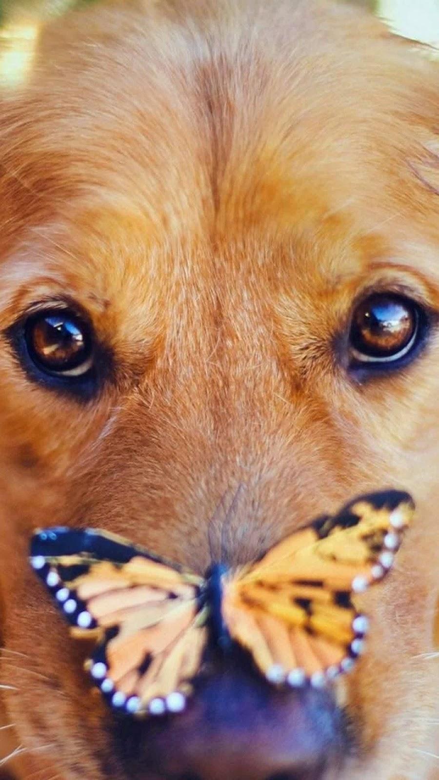 Menguji Obat Ke Anjing Atau Hewan Peliharaan Artikel Bermanfaat