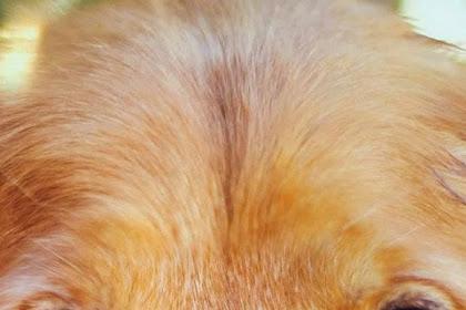 Menguji Obat ke Anjing atau hewan peliharaan ?