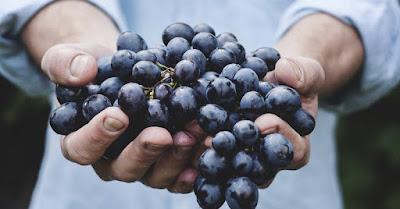 vin bio conventionnel difference oenologie degustation blog beaux-vins