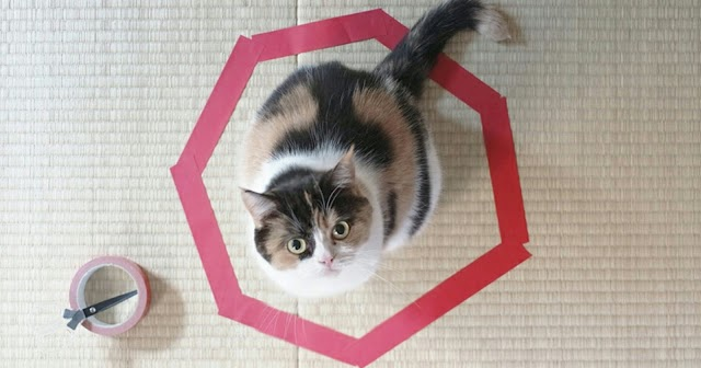 How To Trap A Cat In 3 Easy Steps