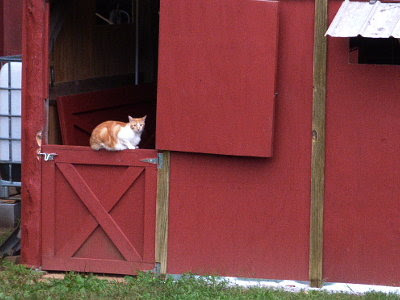 The Dutch door is a favorite place for our barn cats.