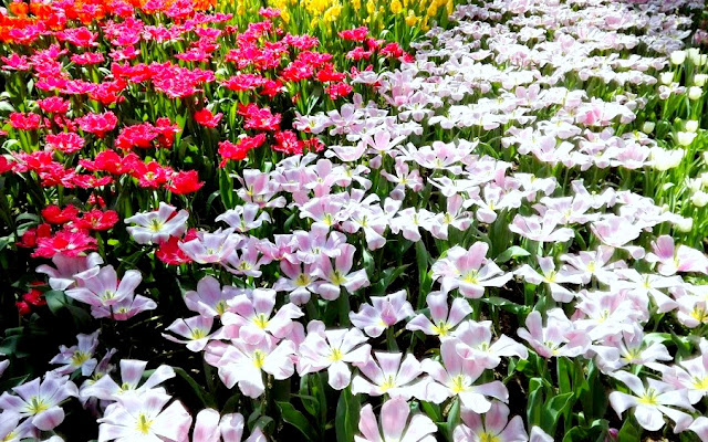 Flower Dome GBTB Singapore