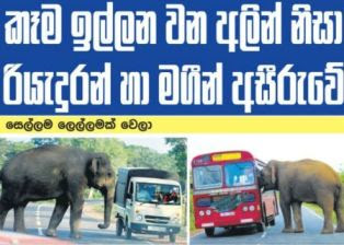Elephants pose a threat in  Kataragama - Buttala Road