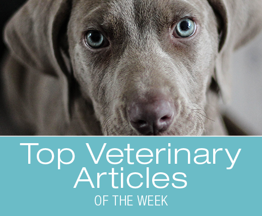 Top Veterinary Articles of the Week: Addison's Disease, Gut and Immune System, and more ...