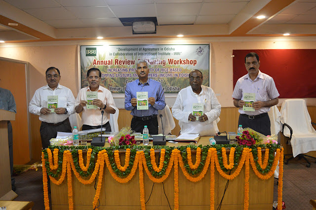Odisha-IRRI personnel review collaborative research progress
