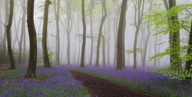 Breathtaking photo may look like a fairytale scene