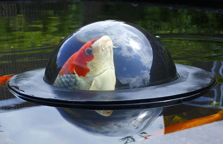 Domo flotante de observación da a los pescados Koi una vista panorámica del planeta exterior