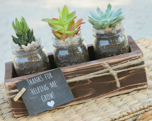 affordable teacher gifts, gift guide, teacher gifts, affordable gifts, diy gift, succulents
