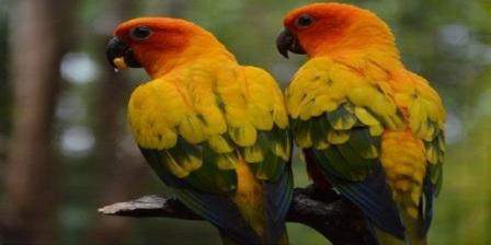 wisata maharani zoo wisata bahari lamongan dan maharani zoo