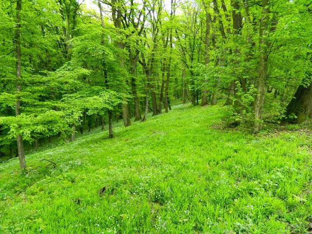zelene-slike