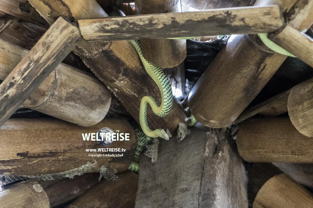 Giftige Schlangen und Spinnen in Thailand. Giftige Tiere in Thailand. Gefährliche Schlangen auf Weltreise.