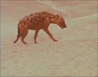 Hyena from Dirkie / Lost in the Desert