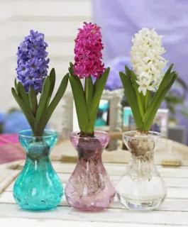 Il fiore amato da apollo il giacinto - Giacinti in casa ...