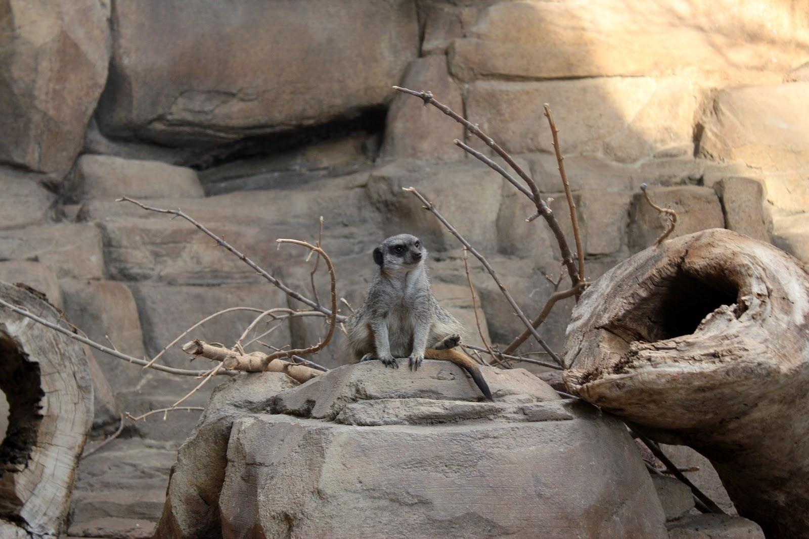 3 Reasons to Visit Omaha\u0027s Henry Doorly Zoo During Winter Hours & 3 Reasons to Visit Omaha\u0027s Henry Doorly Zoo During Winter Hours ...