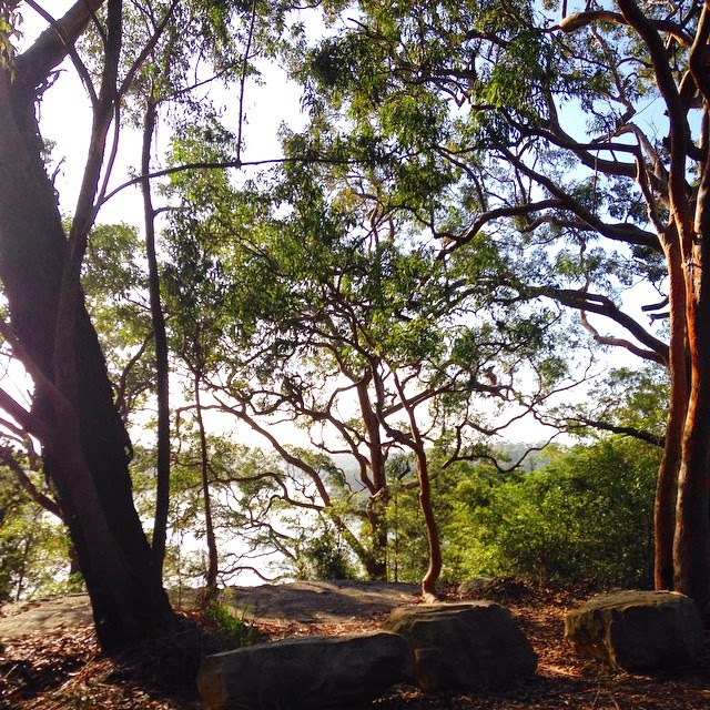 Oatley Park in the Morning