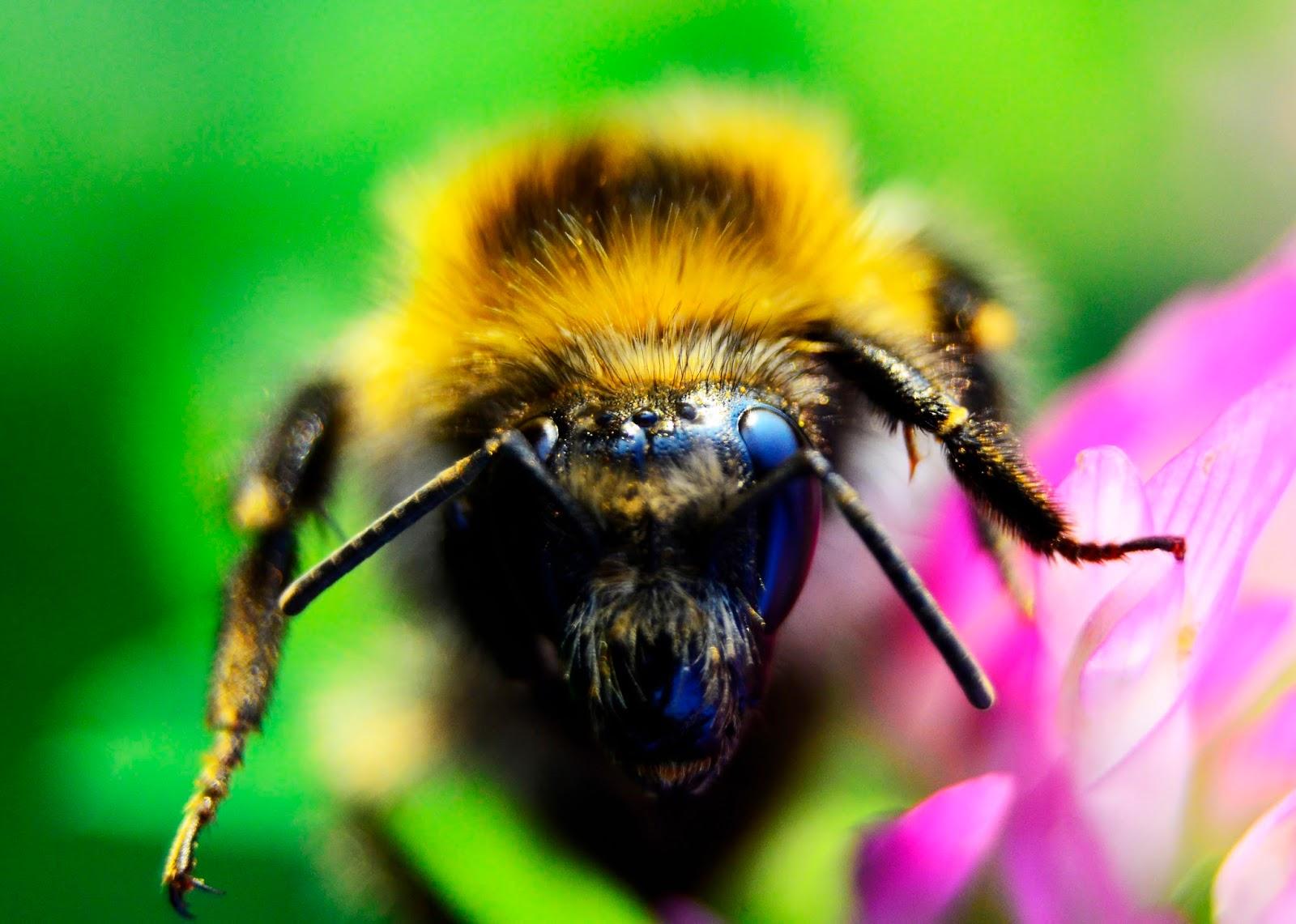 fotogafia | wiosna | makro | kwiaty | pszczoła