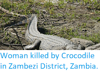 http://sciencythoughts.blogspot.co.uk/2018/03/woman-killed-by-crocodile-in-zambezi.html