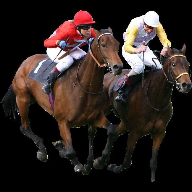 Art Funny Horse Clip Racing