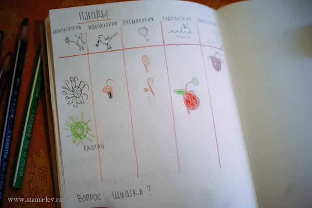 obzor-progulok-2-dlja-naturalista-marafon- kraski-oseni-magija-biologii