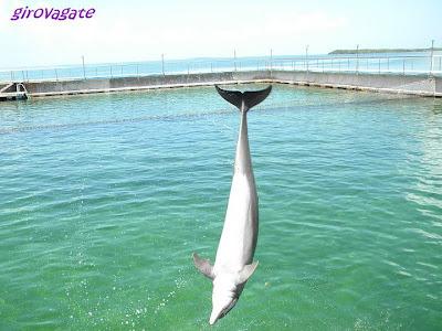 delfini escursione Varadero