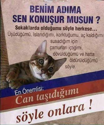 kedi, kedicik, cat, cats, susuzluk, merhamet, açlık, dayak, üşümek, korku, hayvan hakları, hayvanlara şiddet,