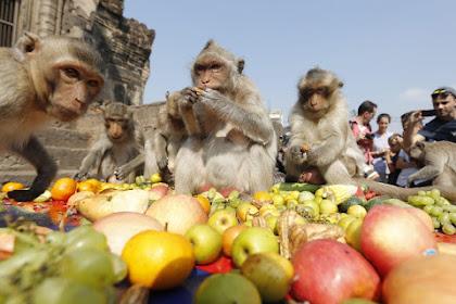 Monkey Buffet Festival - Festival Prasmanan Monyet