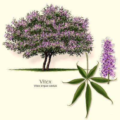 Vitex - A Árvore da Castidade
