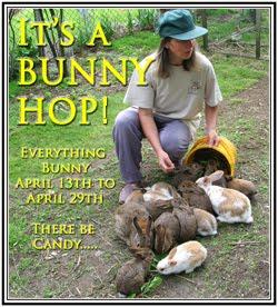 It's A Bunny Hop