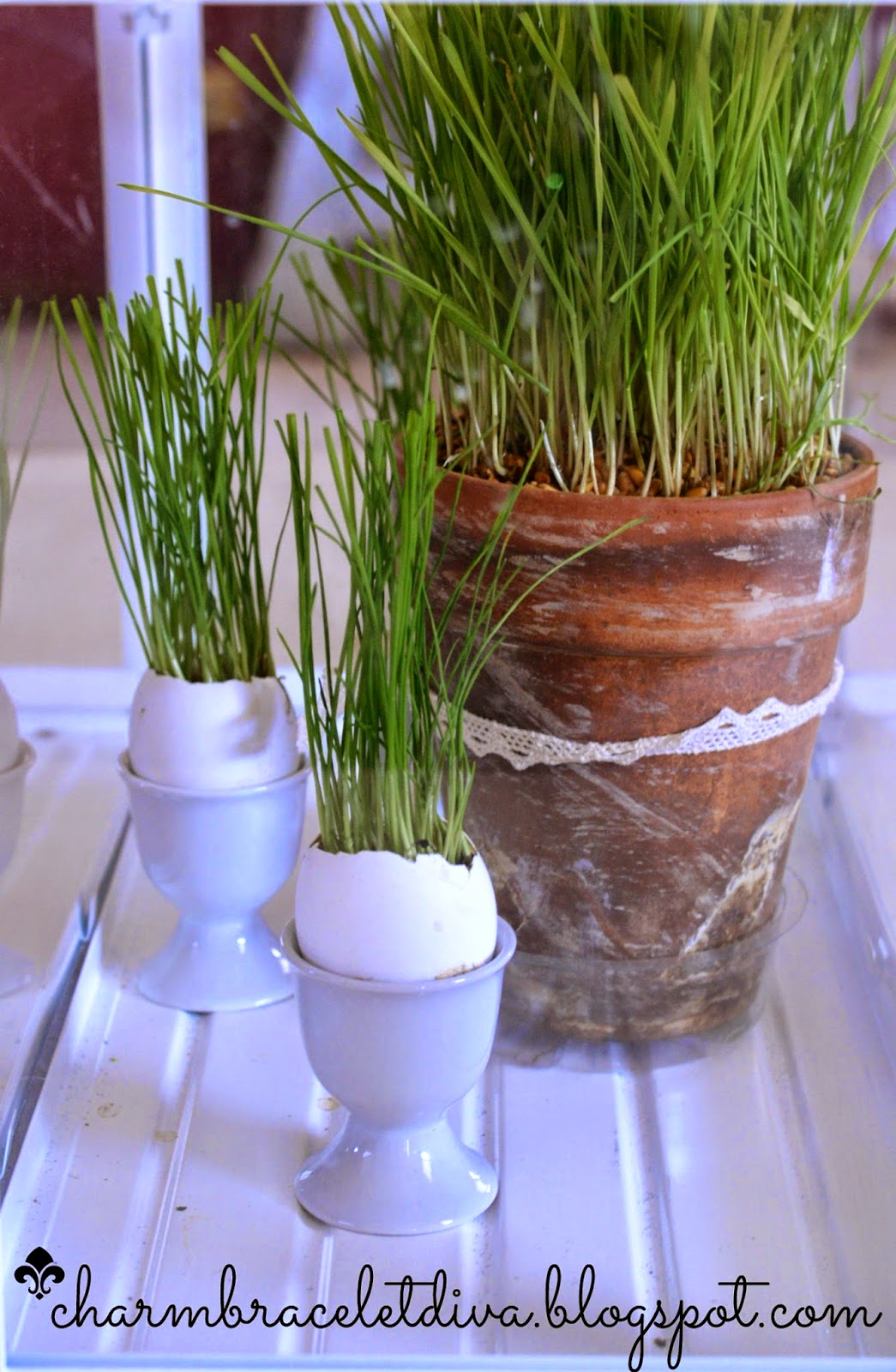 wheat grass egg shells clay pot egg holder