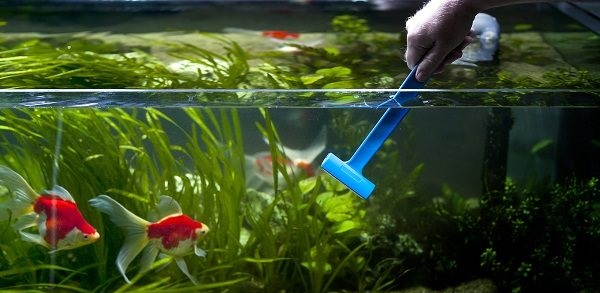 7 Ways to Clean Blurry and Dirty Aquariums