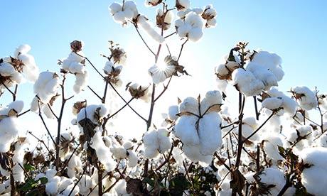 avis champs de coton du sud alcante, blog bougie, blog beauté, blog parfum